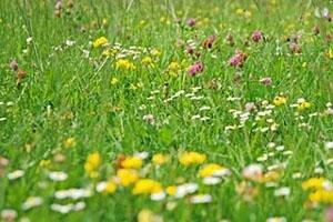 Семена лекарственных трав творят чудеса